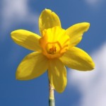 Happy St David's Day!!!